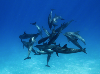 Dolphin Pod Upclose