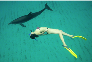 Dolphin Snorkeling underwater green