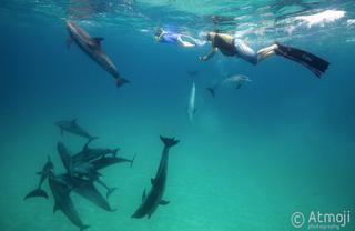 Dolphin Swim underwater