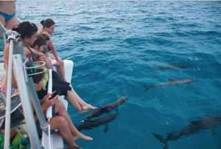Legs over the side of the boat watching dolphins in Bimini